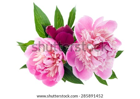 Studio shot of peony bouquet isolated on white background. Top view. - stock photo