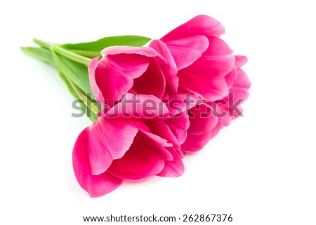 Studio Shot of Pink Colored Tulip Flowers Isolated on White - stock photo