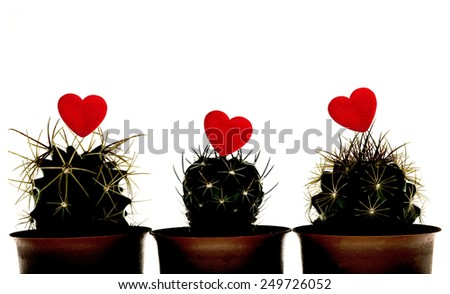 Studio Shot of  silhouette Cactuss with Red Heart  on White background - stock photo