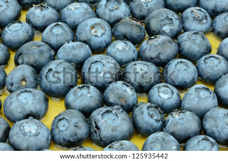 Studio work of a group of blueberries -  Good source of essential nutrients.