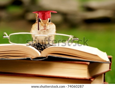 studious little chipmunk wears his cap with tassel, all ready for graduation - stock photo