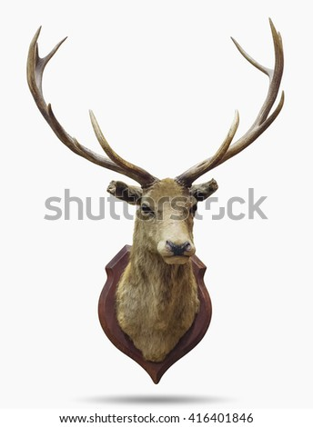 Stuffed deer head isolated on white with clipping path. - stock photo