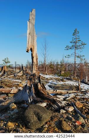 stump - stock photo
