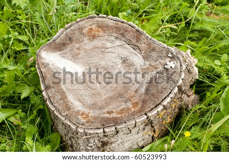 Stump - stock photo