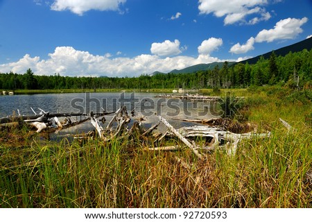Stump filled pond in Northern Maine on a beautiful white puffy cloud sky