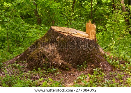 Stump in the forest. Old tree stump covered with moss. - stock photo