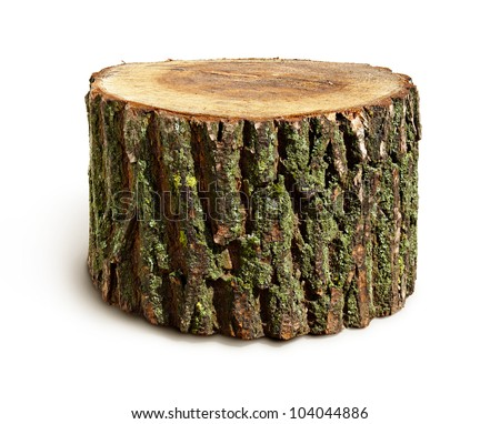 Stump isolated - stock photo
