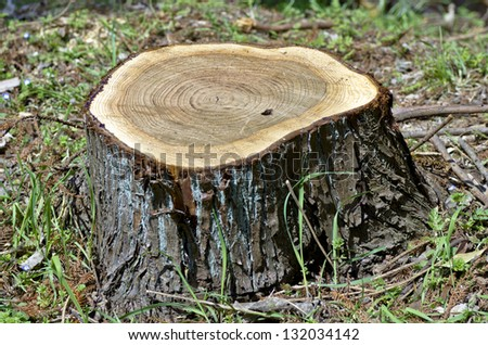 Stump of a cut tree - stock photo