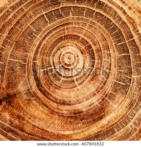 stump of oak tree felled - section of the trunk with annual rings - stock photo