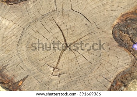 stump of tree felled - section of the trunk with annual rings  and copy space