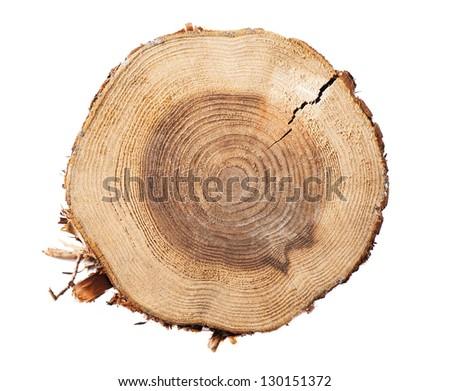 Stump on a white background - stock photo