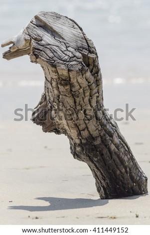 Stump on the beach - stock photo