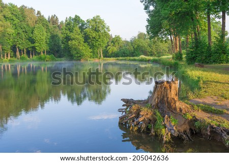 stump on the lake in the forest at dawn - stock photo
