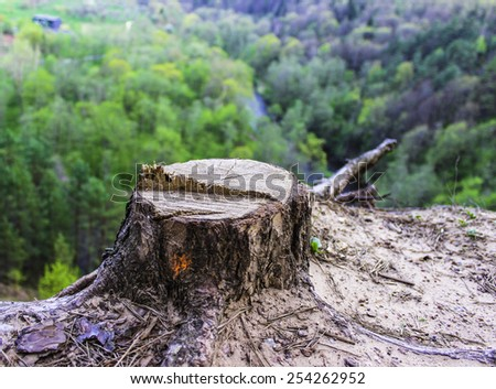 Stump on the slope - stock photo