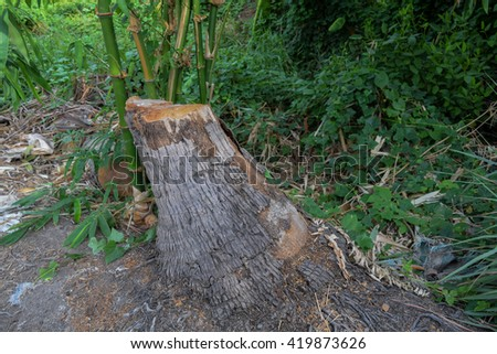 Stumps cut - stock photo