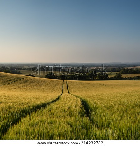 Stunning countryside landscape wheat field in Summer sunset - stock photo