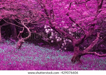 Stunning infra red landscape image of forest with alternative color  - stock photo