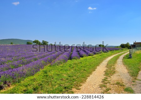 Stunning landscape with lavender field at evening. Plateau of Sault, Provence, France - stock photo