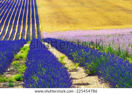 Stunning landscape with lavender field at morning. Provence, France - stock photo