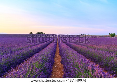 Stunning landscape with lavender field at sunset near Valensole, Provance. France