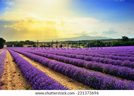 Stunning landscape with lavender field at sunset. Plateau of Sauilt, Provence, France - stock photo