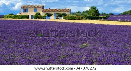 Stunning landscape with lavender field with old farmhouse. Plateau of Valensole, Provence, France