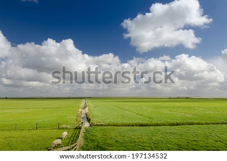 Stunning spring landscape with blue sky background, The Netherlands - stock photo