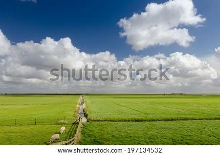 Stunning spring landscape with blue sky background, The Netherlands - stock photo