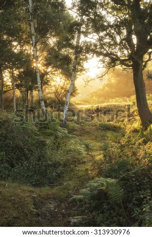 Stunning sunrise landscape in misty New Forest countryside - stock photo