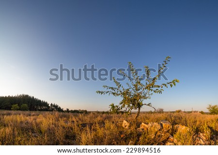 Stunted small tree under bright blue clear sky