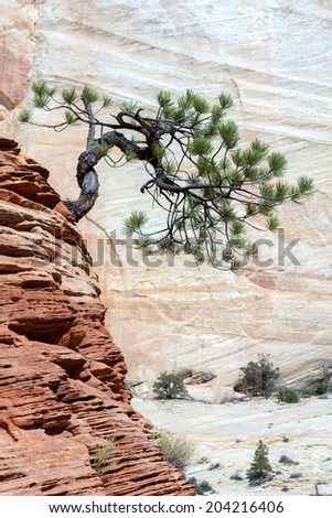 Stunted Tree on a Rocky Outcrop - stock photo