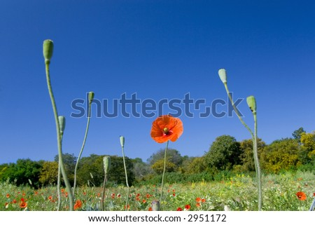 Style nature flower field closeup - stock photo