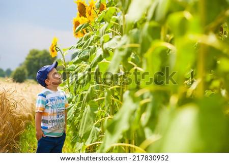Stylish Caucasian boy in sunflowers - stock photo