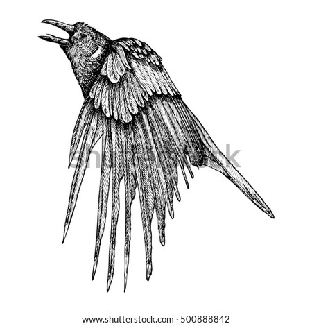 Stylized hand drawing crow. Decorative bird. Hand drawn raven or rook. Black and white drawing by hand. Witchcraft, voodoo magic attribute. Illustration for Halloween.