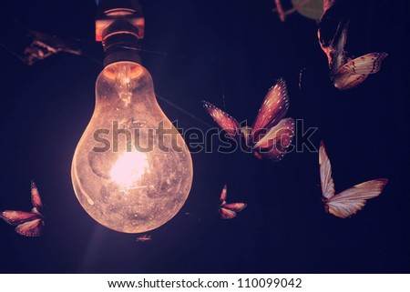 Stylized photo bulb and butterflies flying on light - stock photo