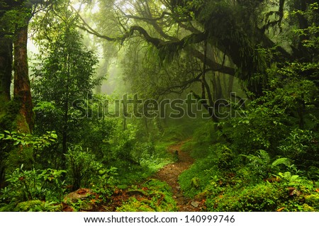 Subtropical forest in Nepal - stock photo