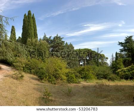Subtropical forest trees under blue sky, Crimea - stock photo
