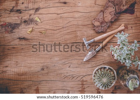 Succulent and cactus in pot and garden tools on wood texture table background with copy space