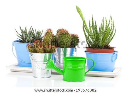 succulent cactus in a metal bucket, on white background