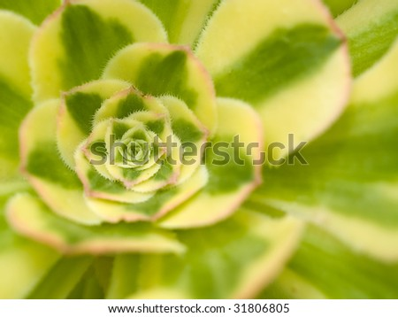 Succulent cactus macro with vivid texture and color; great for desert backgrounds.