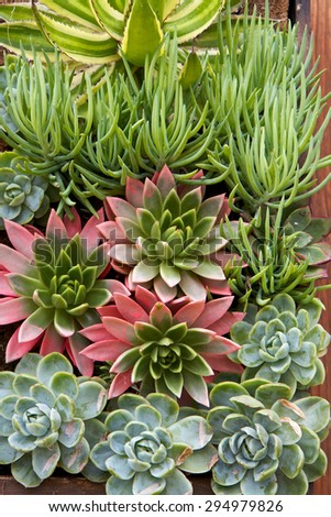 Succulent drought resistant garden on a vertical wall