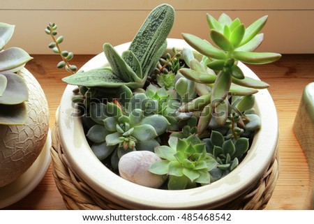 Succulent garden pot by window wooden stock photo royalty free succulent garden in the pot by the window wooden background workwithnaturefo