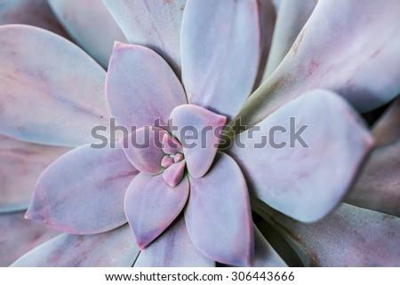 succulent in chiangmai Thailand - stock photo