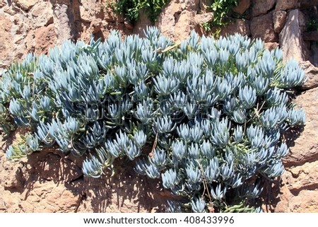 Succulent Wall Stock Photos, Royalty-Free Images & Vectors ...