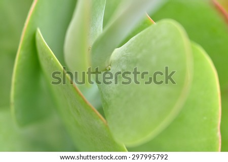 Succulent plant close up. Macro. Selective focus. - stock photo