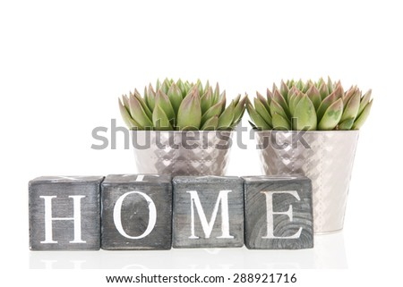 Succulent plants in silver interior flower pots at home isolated over white background - stock photo