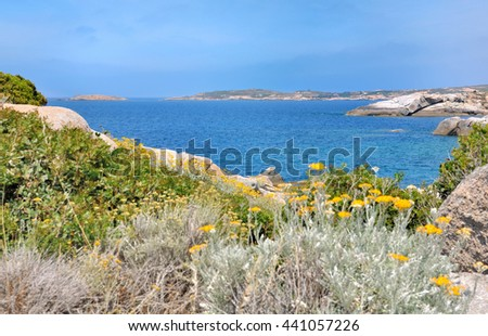 succulent plants with flowers on rocky Corsica coast  - stock photo