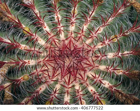 succulent, thorns