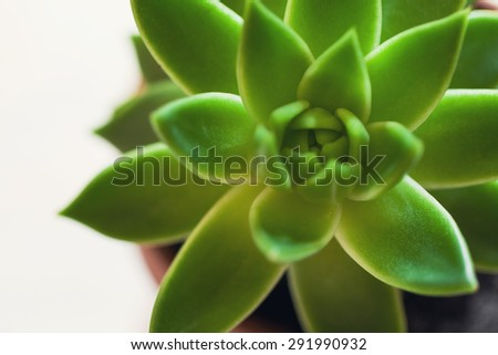succulents in pot over wooden background. Scandinavian style interior decoration - stock photo