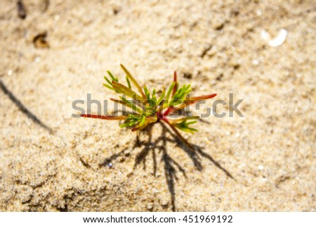 Succulents in the sand. - stock photo